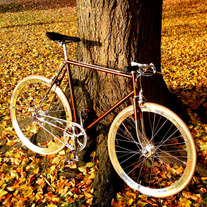 Koga Miyata Gent´s Luxe Singlespeed photo