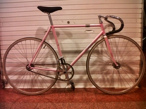 Pink fade Makino NJS photo