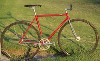 Procyon NJS photo