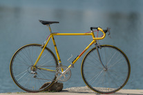 Yellow Fever (For Sale) photo