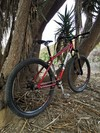 Bianchi Rita SS Hardtail 29er photo