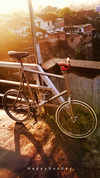 Minivelo Fixed Gear photo